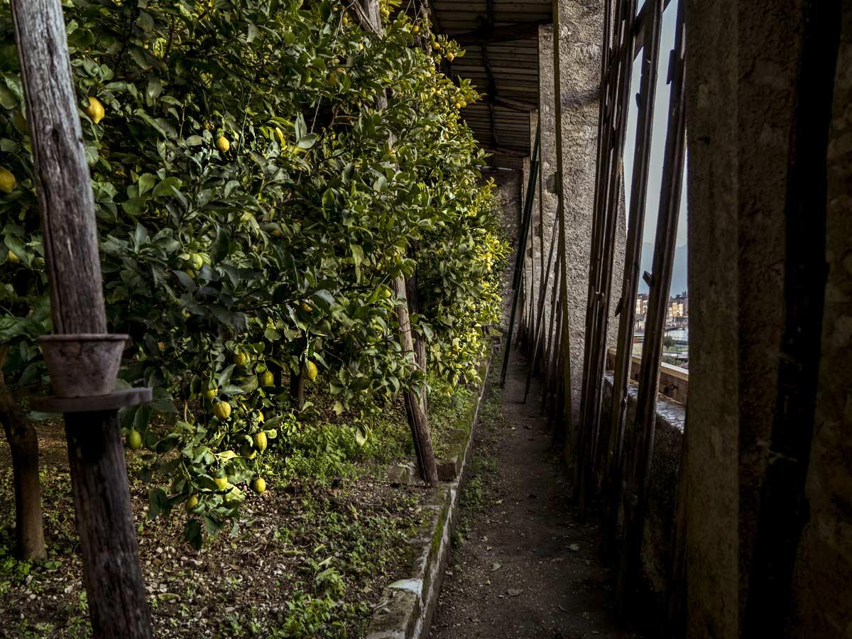 Limonaia la Malora - Gargnano Lago di Garda - i limoni